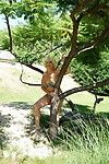 Lascivious fairy-haired ready woman getting appealing in her garden